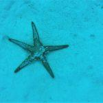 stella marina T.U. Torino
