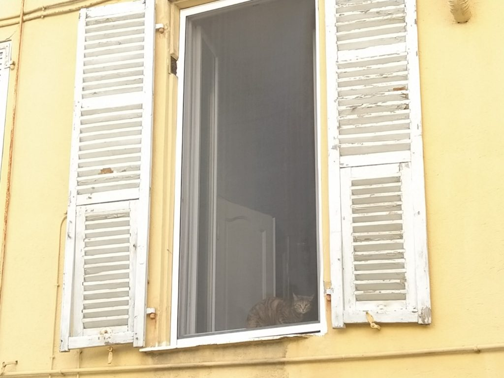 Un gatto alla finestra (ph, Giovanni Gugg)