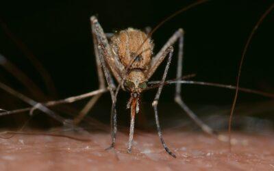 Dengue a Nizza: 5 casi