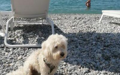 Nuova spiaggia per cani a Nizza